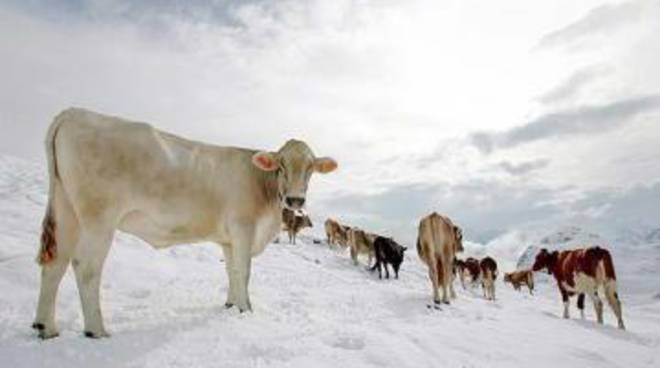 Emergenza neve: Cia sollecita Regione su stato calamità