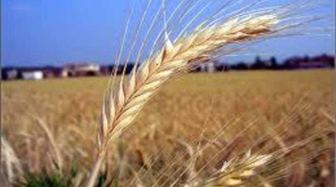 Agricoltura: Febbo, 5 milioni alle aziende per il biologico