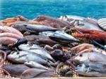"""Consumi, pesce: Coldiretti """"è finito quello italiano, attenzione a frodi"""""""