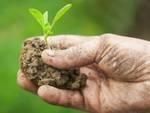 Agricoltura: contributi per consulenze di professionisti