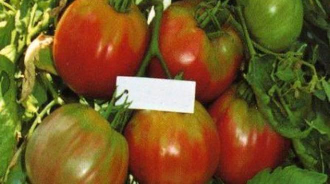 E' abruzzese il re dei pomodori