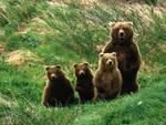 Parco nazionale, l'estate dei cuccioli d'orso