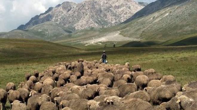 Rassegna ovini a Campo Imperatore