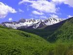 Parco Nazionale, taglio abusivo legna di grave entità