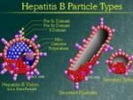 Epatite B: un malato su due non lo sa