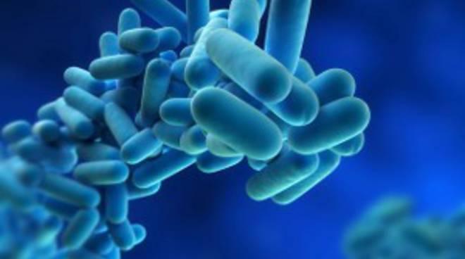 Legionella: Adsu restituisce cauzione