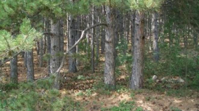 Pineta Roio, alberi danneggiati da neve e vento