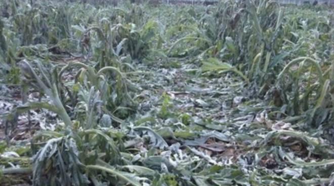 Agricoltura, Cia lancia allarme gelo