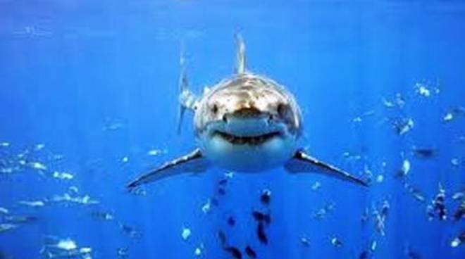 Dramma in Nuova Zelanda, squalo uccide un 47enne