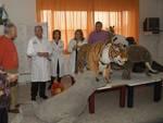 Avezzano: mini zoo di peluche a pediatria