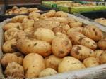 Finiscono le patate del fucino