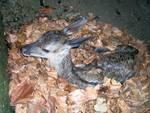 Wwf, in Trentino norma estrema su cuccioli