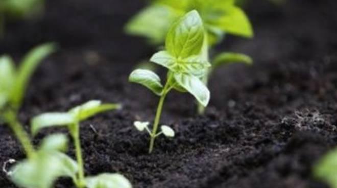 Agricoltura: in carceri minorili si insegna a coltivare Bio