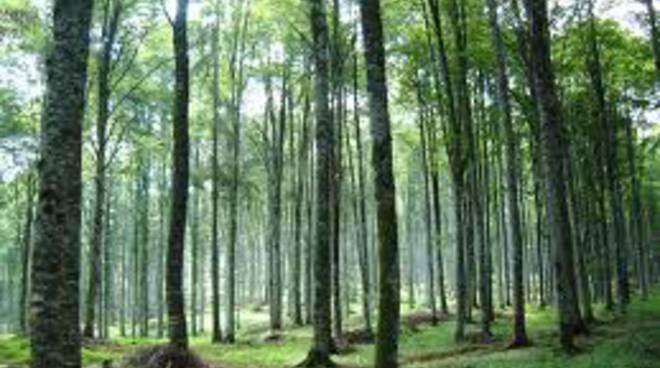 Foreste, 6 milioni di euro per la valorizzazione