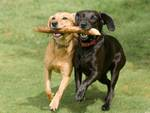 Open puppy party: giornata dedicata ai cuccioli