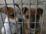 Veterinari uccidono cuccioli, Enpa: «radiarli dall'Albo»
