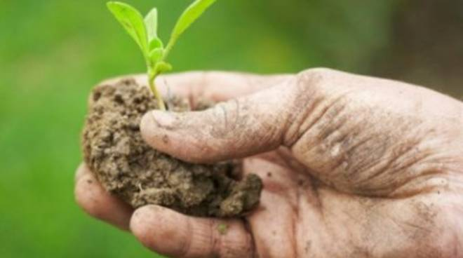 Agricoltura, pioggia di fondi per ospitalità turistica e didattica