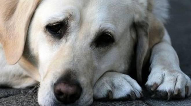 Cimurro: «Tutelare anche i cani abbandonati»
