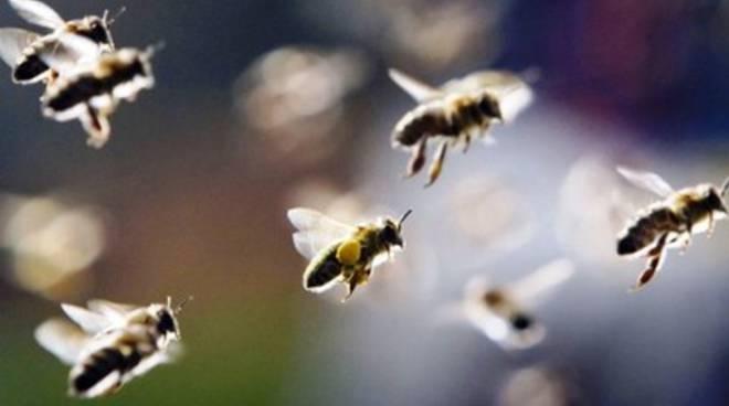 Paese invaso da 10mila api
