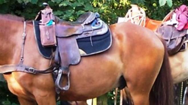 Pellegrinaggi, a cavallo da Ortona a Roma