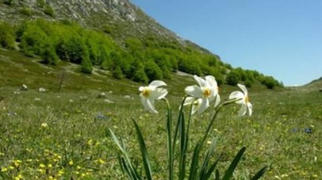 Parco Nazionale, studio punti d'acqua per preservare habitat