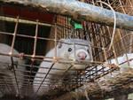 Stop agli allevamenti per pellicce