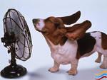 Estate: oggi la prima ondata di calore del 2013