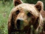 L'Aquila, scappano anche gli orsi