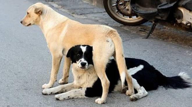 """Animalisti mobilitati contro """"ordinanza affama randagi"""""""