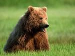 Regione tuteli orso, serve ok all'Area Contigua