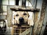 Tagliacozzo, incontro con i cani meno fortunati