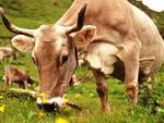 Abruzzo e Angola, nasce task-force veterinaria