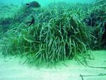 Alga tossica, divieto balneazione su tratto Costa Trabocchi