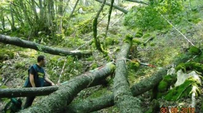 Furto di legna, quattro denunciati