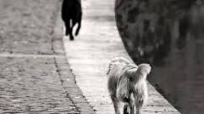 «Consiglio uscente non sia 'ammazza cani'»