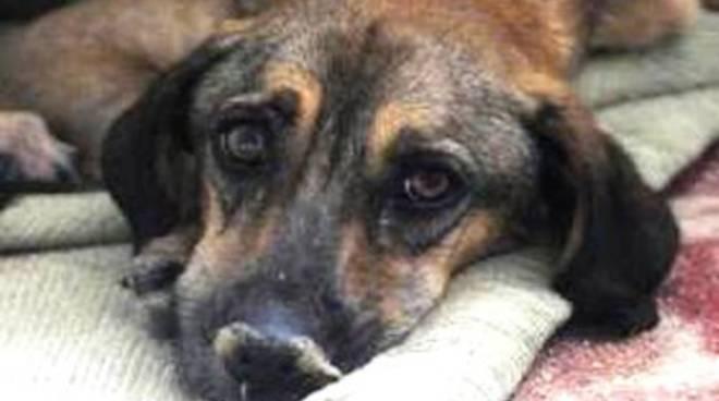 Legge ammazza cani: rinviata
