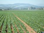 Legge stabilità, preoccupazione degli imprenditori agricoli