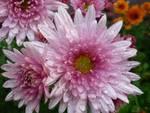 Ricordo defunti, 400 milioni spesi in fiori