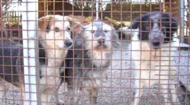 Teramo, «112 cani spostati senza rispettare la legge»