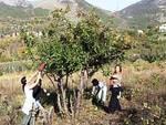 Wwf in Abruzzo: «Salviamo un melo per l'Orso»