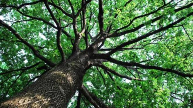 Abruzzo, 4 milioni per le foreste