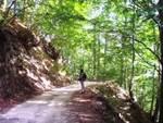 Febbo soddisfatto: «Arriva la legge che 'protegge' le foreste»