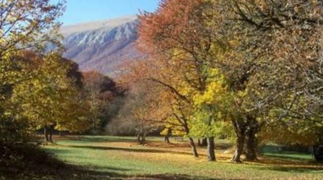 Forestazione, approvata legge organica