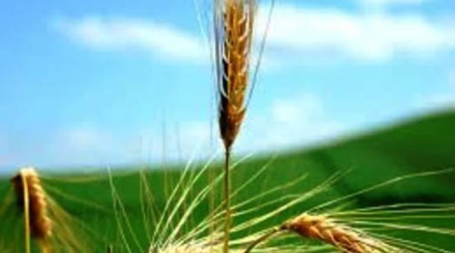 L'agricoltura al centro: si parla di crisi