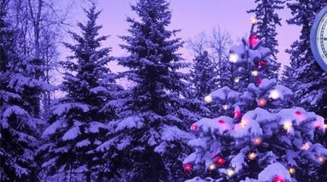 L'Aquila, Comune regala alberi di Natale