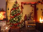 L'Aquila, trenta conifere per Natale