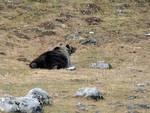 Parco, proseguono incontri su gestione orsi confidenti