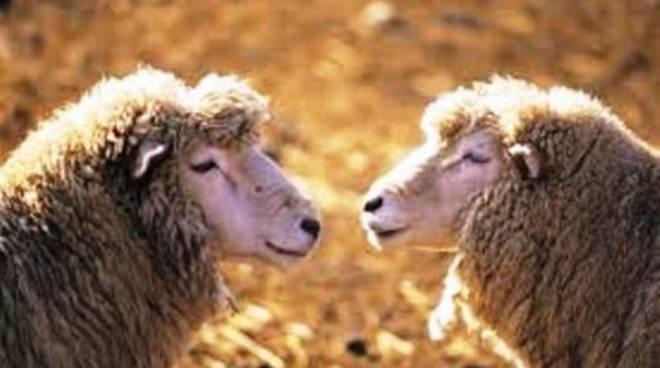 Ue, no alla clonazione degli animali allevati