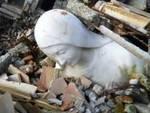 Un libro sull'arte aquilana ferita dal sisma