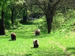 Un orso da salvare: le 8 proposte del Parco